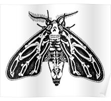 Death's-head Moth Poster