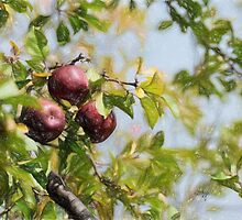 Apple Pickin' Time by Lois  Bryan