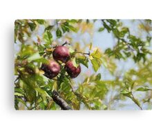 Apple Pickin' Time Canvas Print