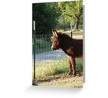 Young, fluffy donkey looks Greeting Card