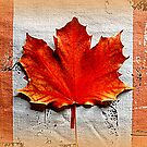 The Maple Leaf by ©The Creative  Minds