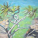 Postcard.....from Noosa..... by gillsart