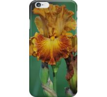 Yellow and Brown Iris By Lorraine McCarthy iPhone Case/Skin