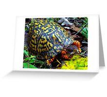 Colorful Box Turtle Greeting Card