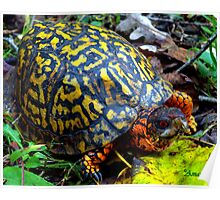 Colorful Box Turtle Poster