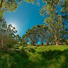 Looking out from Lachlan Swamp by Erik Schlogl
