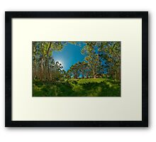 Looking out from Lachlan Swamp Framed Print