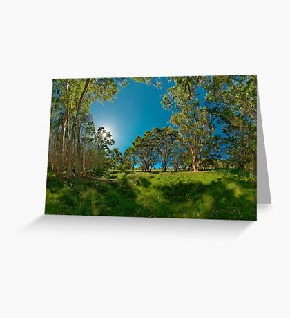 Looking out from Lachlan Swamp Greeting Card