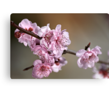 Dainty in Pink Canvas Print