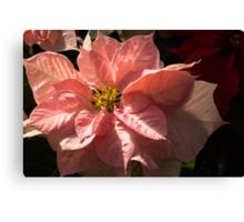 Sunny Pink Poinsettia - Vivacious Christmas Greetings Canvas Print