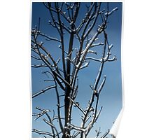 Mother Nature's Christmas Decorations - Icy Twig Jewels Poster