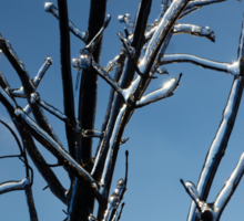 Mother Nature's Christmas Decorations - Icy Twig Jewels Sticker