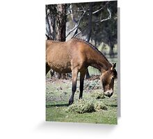 The Boss Mare Greeting Card