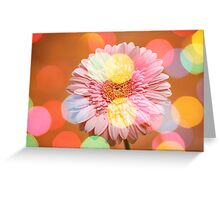 Gerbera  Greeting Card