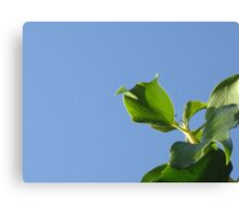 GREEN IVY AGAINST BLUE SKY (SPOT THE FLY) Canvas Print