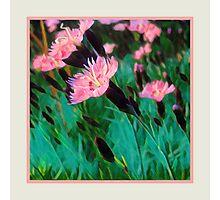 Pretty Pink Flower Original Art Photographic Print