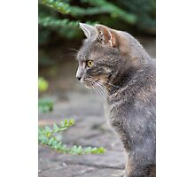 curious cat Photographic Print