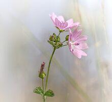 Life is beautiful II ... (new edit and crop) by Bob Daalder