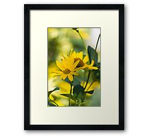 yellow flower in spring Framed Print