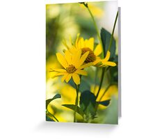 yellow flower in spring Greeting Card