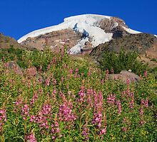 Mount Baker over pink flowers on Heliotrope RIdge by DArthurBrown