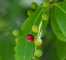 berries in the forest by spetenfia
