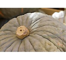pumpkin in the garden Photographic Print