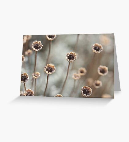 Dried out daisies - 2016 Greeting Card