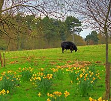 Black Coo by Tom Gomez