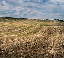 Moravia fields by whitebeardcz