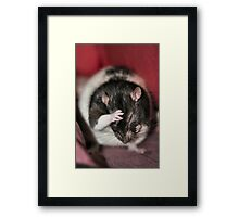 Oh Geez...another photo shoot Framed Print