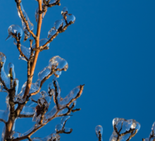 Mother Nature's Christmas Decorations - Ice Jewelry Sticker