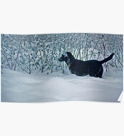 Snow Lab - black and white fun Poster