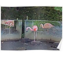 Ballet De Flamingo Poster