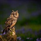 Long Eared Owl - In Bluebell Wood by George Wheelhouse