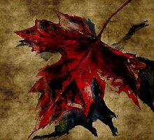 Canadian Maple Leaf Fall Edit by JamesPeart