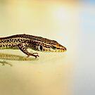 Lizard by dedakota