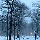 Snowy picnic at Pelham Bay Park by Alberto  DeJesus