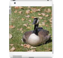 Canadian Goose Sitting iPad Case/Skin