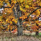 Burr Oak I by Roger Passman
