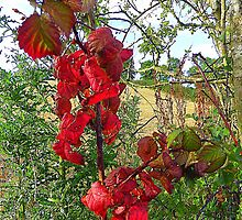 Red Leaves And Stubble by Fara