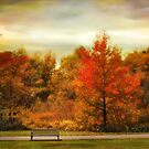 Autumn Ablaze by Jessica Jenney