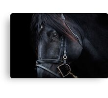 Black Stallion Horse Canvas Print