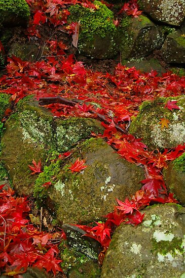 Autumn Leaves on Rocks. by Bette Devine