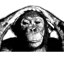 Wise Chimpanzee. Wildlife Digital Engraving Image by digitaleclectic