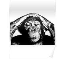 Wise Chimpanzee. Wildlife Digital Engraving Image Poster