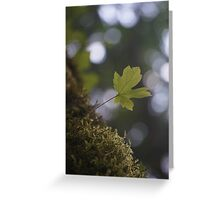Sprout Greeting Card