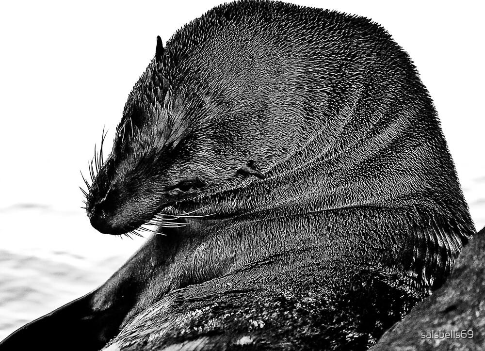 Australian Fur Seal B&W by salsbells69