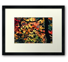 AUTUMN SILOUETT,GREAT SMOKY MOUNTAINS,NP Framed Print
