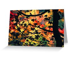 AUTUMN SILOUETT,GREAT SMOKY MOUNTAINS,NP Greeting Card